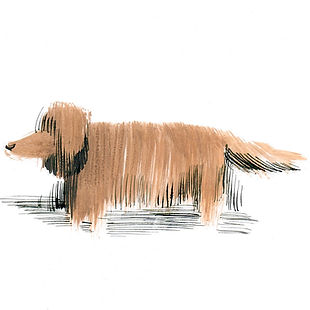 shaggy-dog.jpg