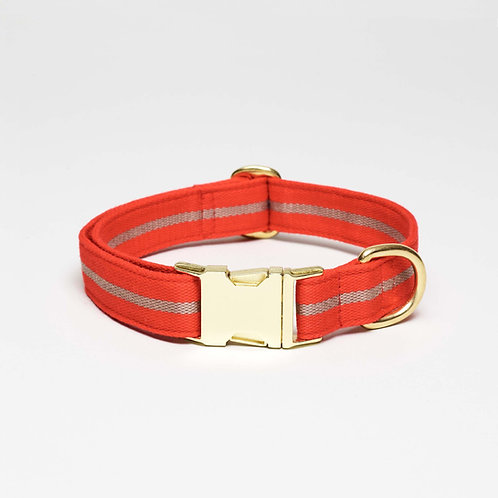 dog collar orange with metal hardware, top dog cool cat, Hundehalsband