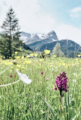 tdcc-meadow.jpg