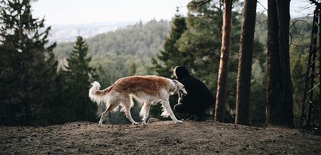 dog-woods-top dog cool cat Wanderlust Kollektion 05.jpg