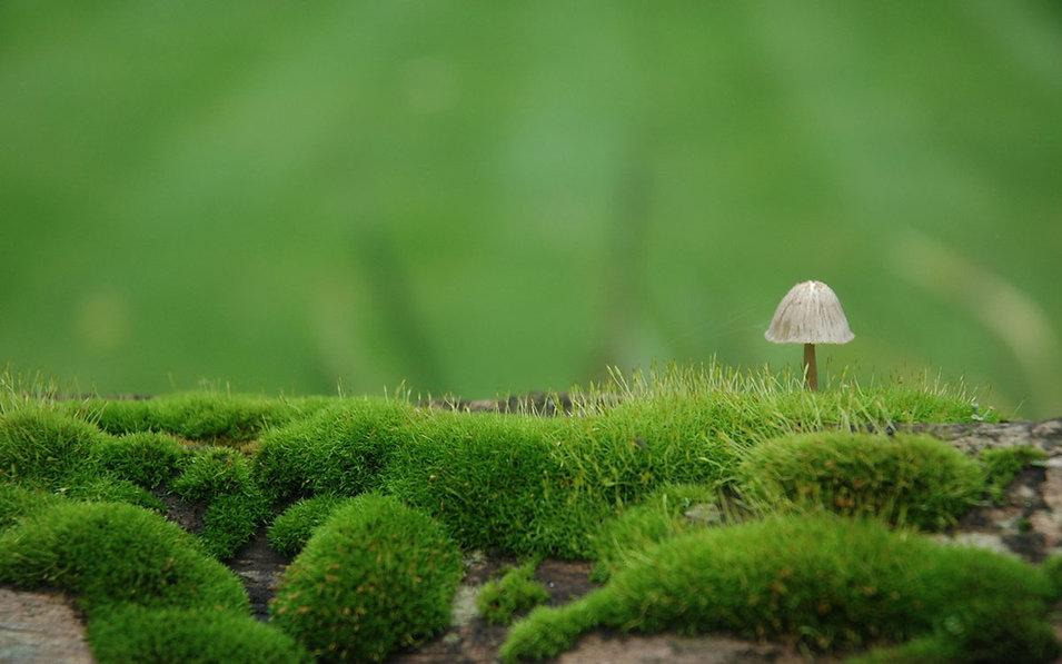 champignons méicinaux