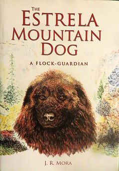 The Estrela Mountain Dog, a Flock Guardian