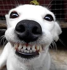 smiling dog 2.jpg