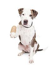 bandaged dog.jpg