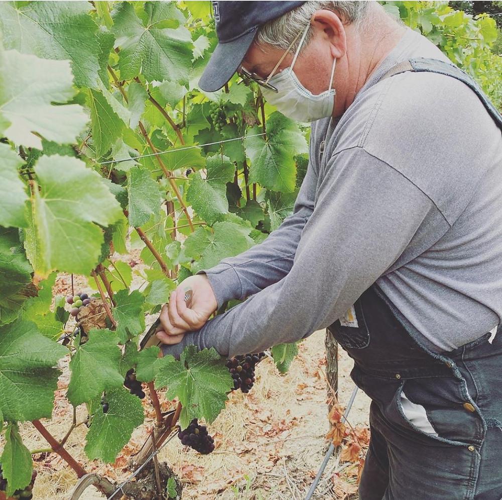 California Wine Region - Alquimista Wine, best red wine in America