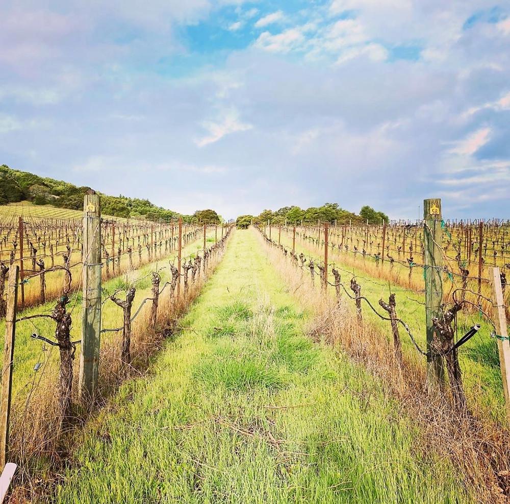 California Wine Region Alquimista Cellars Vineyards Best Red Wine in America