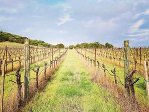 Gold Medal Wines of Alquimista Cellars | California
