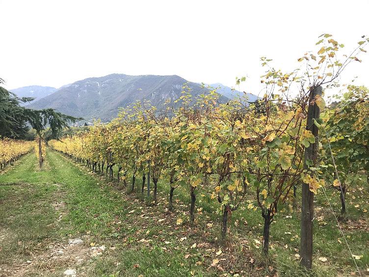Northern Italy Landscape 1.JPG