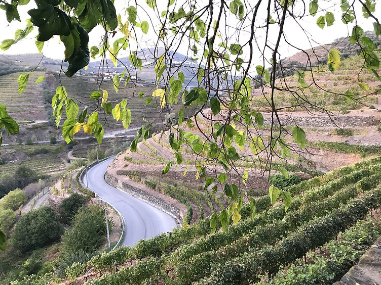 Douro through the branches.JPG