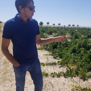 Producer Q & A: Miguel Arroyo of Bodega Arroyo Izquierdo, Rueda, Spain