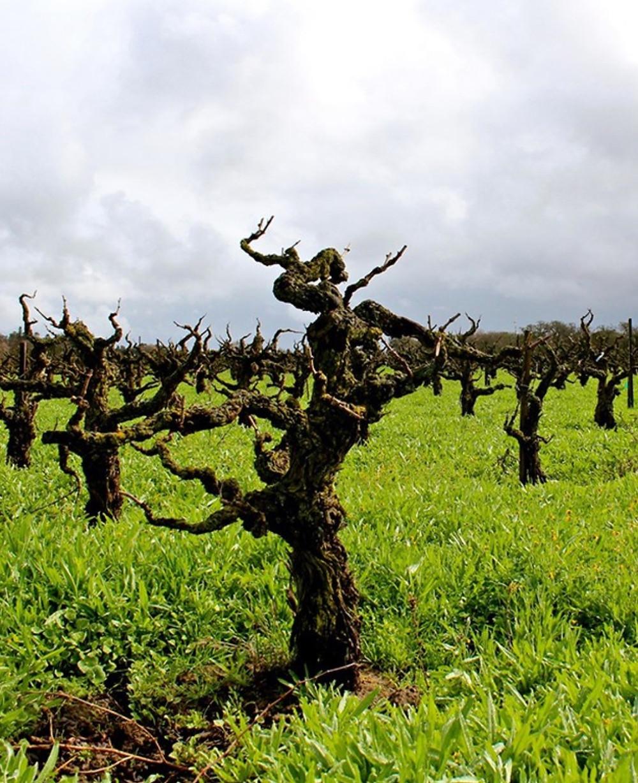 California Wine Region Alquimista Cellars Best Red Wine
