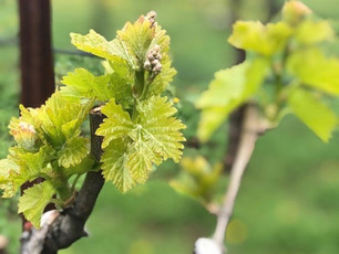 Climate Change & Wine