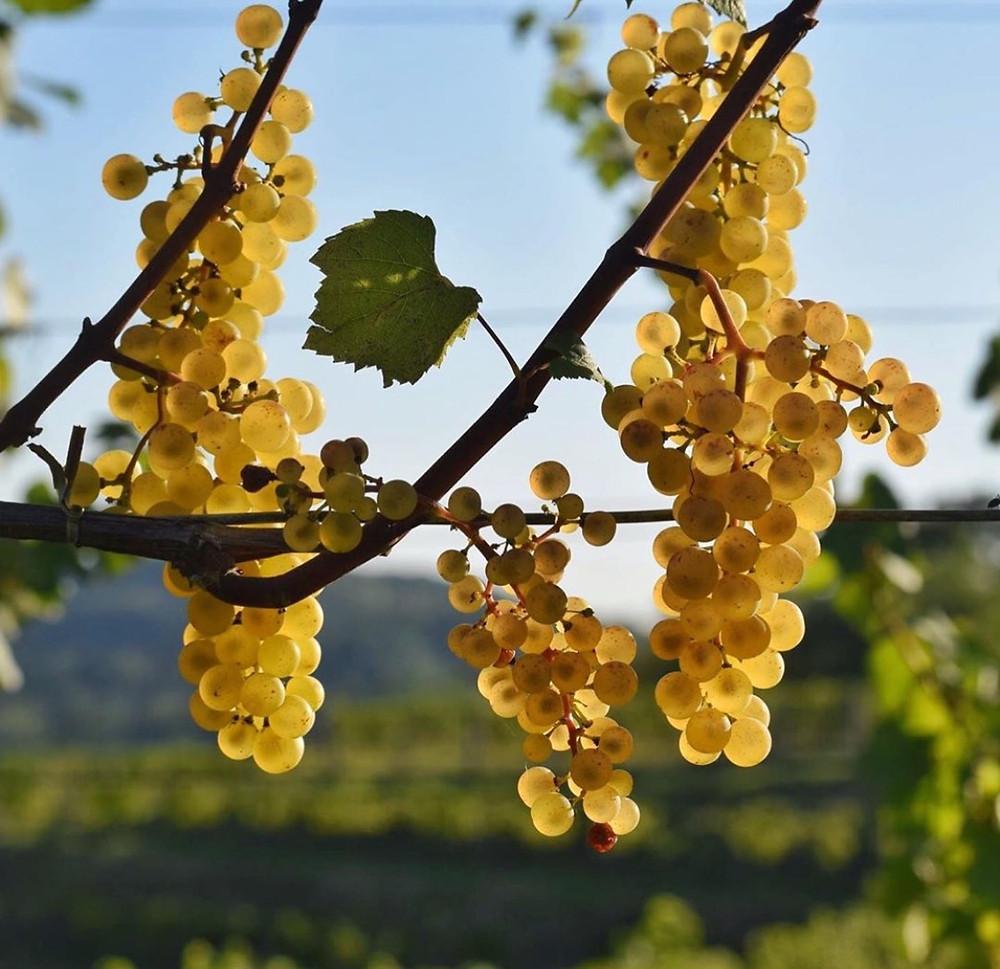 Veneto Wines Italy Petrussa Bianco Wines and Winemaking & Travel