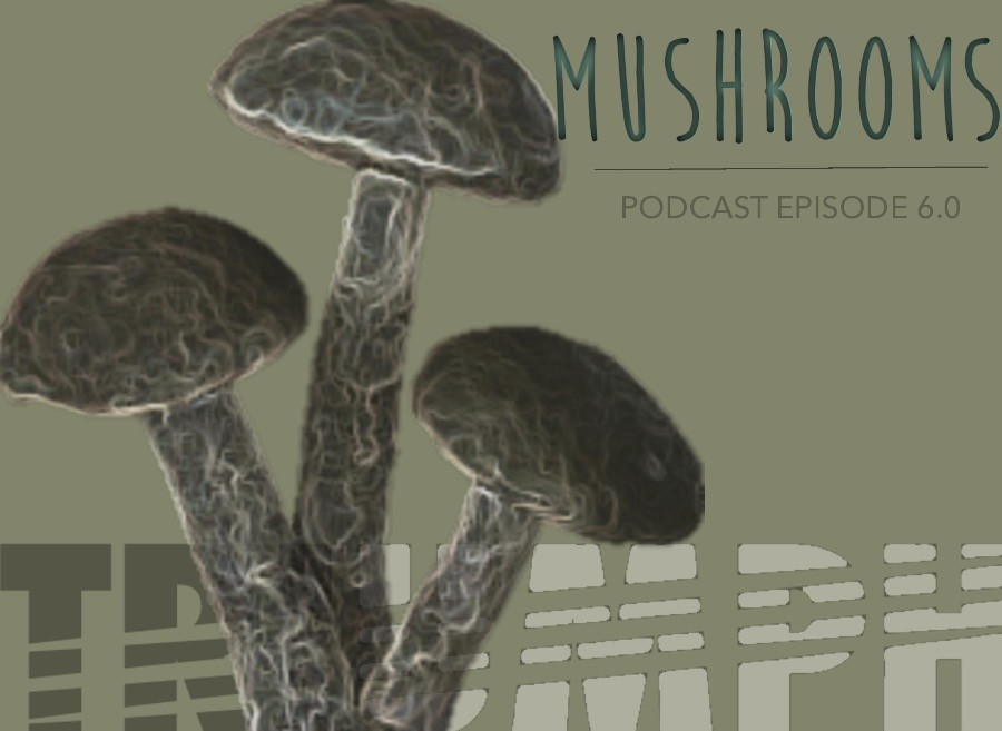 TRIUMPH PODCAST 6.0_MUSHROOMS