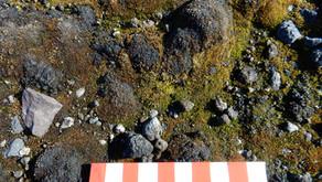 Biological Soil Crusts in polar regions