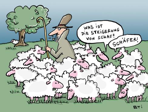Schaf, steigerungsfähig