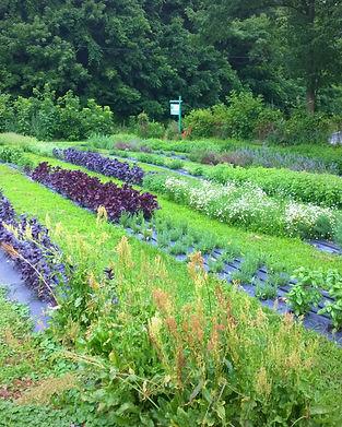 jgs garden.jpg