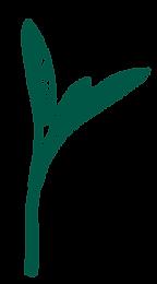 Sage-Dark green.png