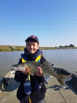 Missouri River Walleye