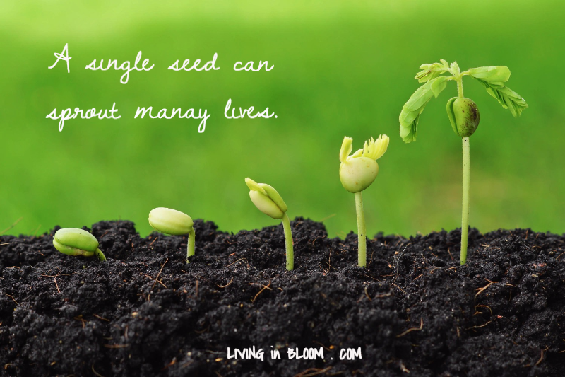 Inspirational Meme | Living in Bloom by Mary Abraham