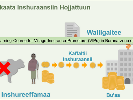 IBLI eLearning course for village insurance promoters (VIPs) in Borana zone of Ethiopia