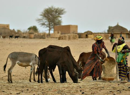 EOPAM -  A new  drought index-insurance model for African pastoral regions - phase 2