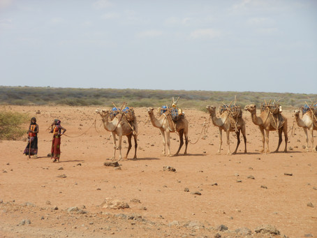 Feasibility of index-insurance for livestock in Somalia