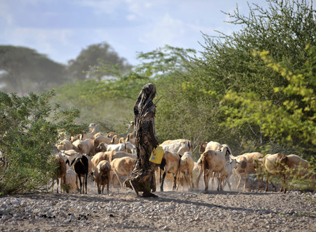 Can Asset Transfer & Asset Protection Policies Alter Poverty Dynamics in Northern Kenya?