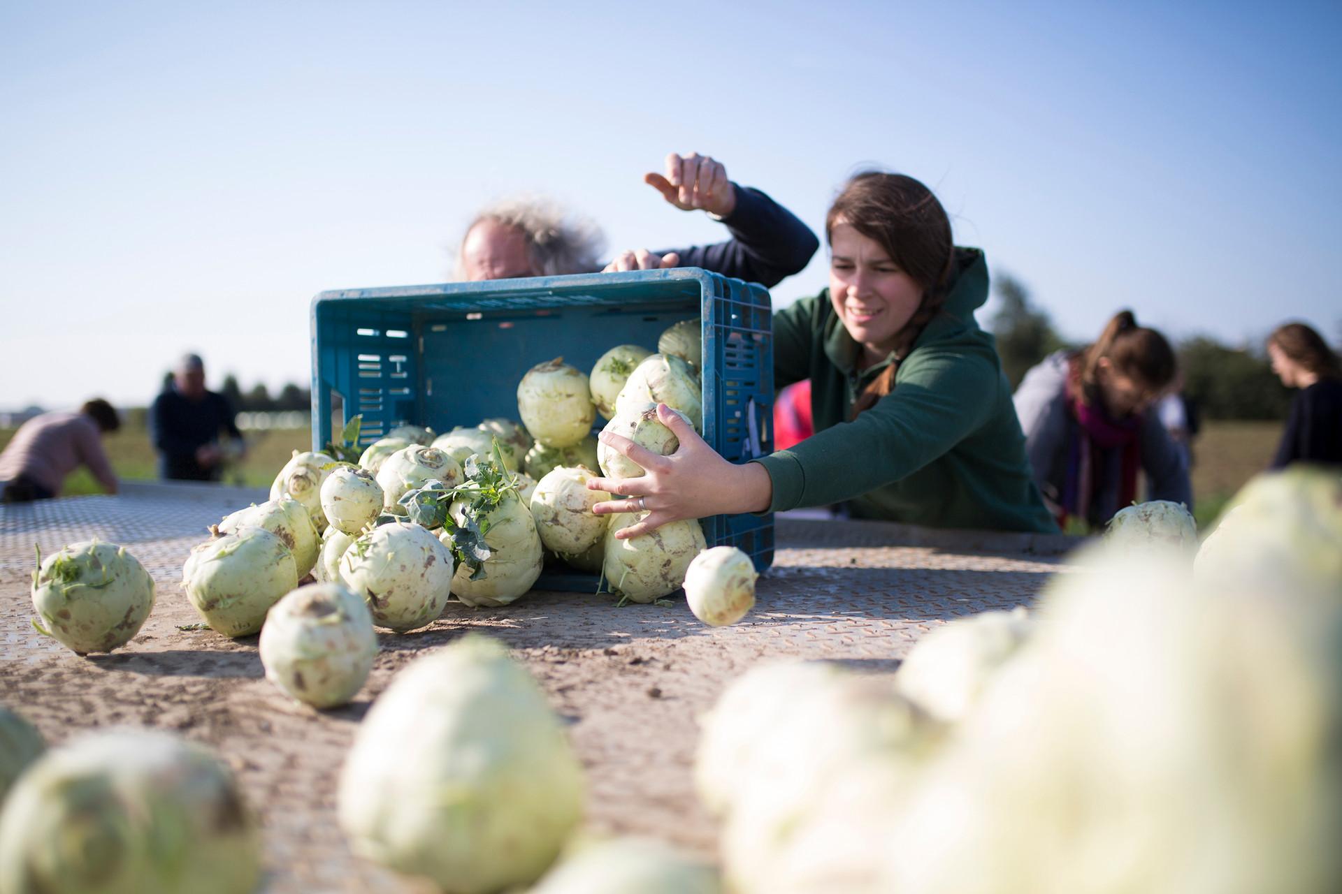 Activiteit Gleaning