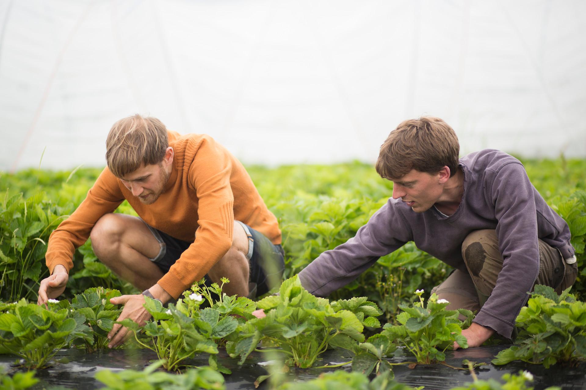 Research Seasonal Farming