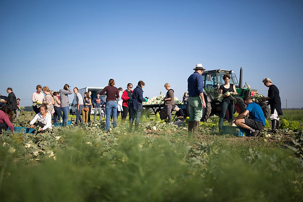 30-Harvesting & Dining in the Field.jpg