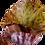 Thumbnail: Nymphaea lotus