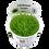 Thumbnail: Utricularia graminifolia