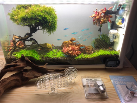 Start you Aquascape Today