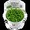 Thumbnail: Micranthemum 'Monte Carlo'