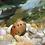 Thumbnail: Tire track nerite snail