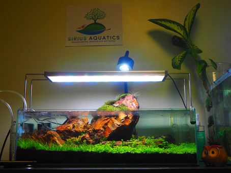 Looking for quality products for your new Naturalistic Aquascape?  come visit our Online Store!