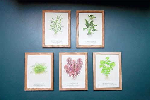TROPICA Art Cards 5 set ''Ozelot