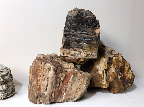 Petrified Wood ( fossilized wood)