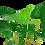 Thumbnail: Anubias gracilis