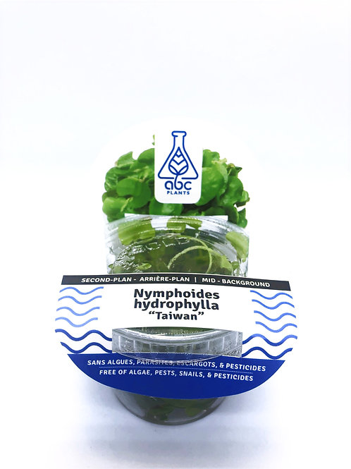 Nymphoides hydrophylla'Taiwan'