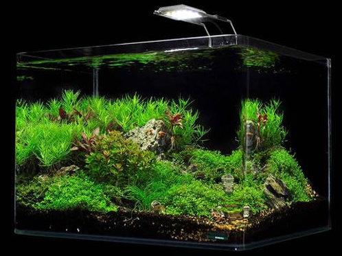 Shrimp Tank Dennerle 10 Gal