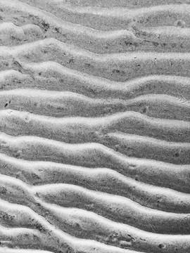 Cape Cod Textures, 2020