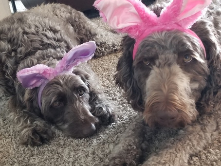Skye and Lacy Easter wishes