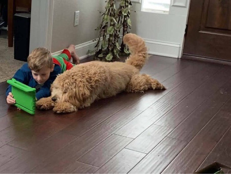 English Goldendoodle Families