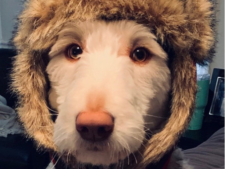 Getting ready to brave the winter weather⛄️