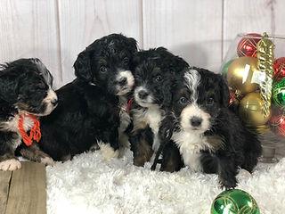 4 puppies 4.jpg