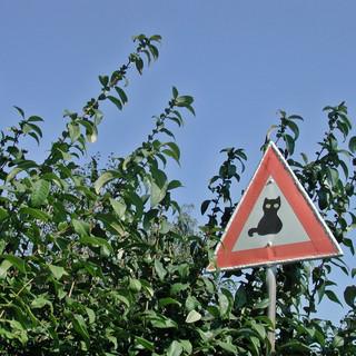 Que faire si l'on trouve un chat renversé sur la route ?