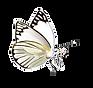 Schmetterlingen Freizeitpark Seerosengarten