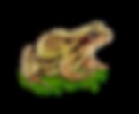 Frog-Seerosengarten-Balingen.png